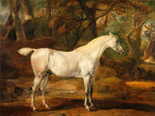 Free shipping art Oil painting white horse standing in forest Hand painted canva