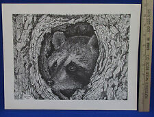 Signed Print Picture Mark Enblom Numbered 26 of 100 Raccoon in Tree Den Nature