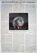 """The POMERANIAN DOG Transformed"" - 1961 Magazine Article (1-Sided Cutting)"