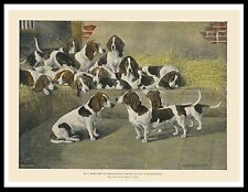 Basset Hound Pack Dogs In Kennels Lovely Vintage Style Dog Print Poster
