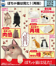 Japan Fatty Fat Cat Kittie Cats PVC mini Figurine Figure  Set 6pcs