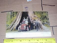 Canada British Columbia Women Canada Famous Trees Model T Electric? Car Vintage