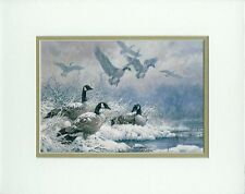 Winter Retreat Larry Fanning Canadian Geese Birds Double Matted Fits 8x10 Frame