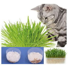 Harvested Cat Grass 1 Oz / Approx 100 Seeds 100% Organic Excellent