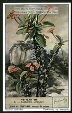 Crown Of Thorns Cactus Succulents Plant  50 Y/O Card