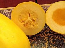Large SPAGHETTI SQUASH -- USA organic seeds (9). Unusual squash, easy to grow!