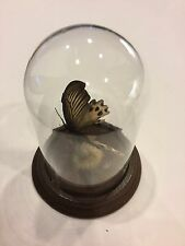 Butterfly Glass Dome by Gerhard & Co.