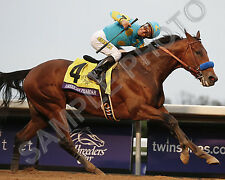 AMERICAN PHAROAH 2015 BREEDERS CUP CLASSIC CHAMPION WINNER HORSE 8X10 PHOTO