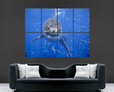 GREAT WHITE SHARK POSTER SEA FISH GIANT LARGE WALL ART POSTER PICTURE BIG
