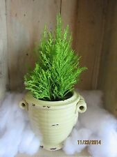Rustic Mini Tuscany Cache Pot for Plants Celery Green