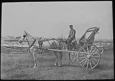 VICTORIAN Glass Magic Lantern Slide MAN ON A GRAND PONY AND TRAP C1890 PHOTO
