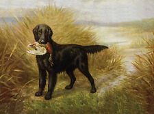 FLAT COATED RETRIEVER CHARMING DOG GREETINGS NOTE CARD BEAUTIFUL DOG & DUCK