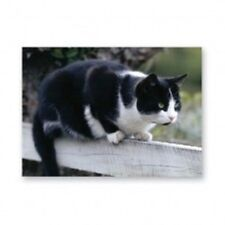 BLACK AND WHITE CAT GREETINGS CARD