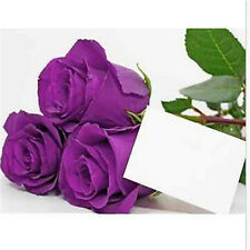 FD708 10 Seeds Chinese Purple Rose Seed For Lover Purple Rose Flora Seed 10pc A