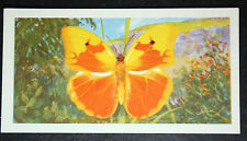 Cuban Yellow Butterfly    Tropical Butterfly  Illustrated Colour Card  VGC