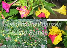 Arena Mirabilis Jalapa mediterráneo 2-color Flor 10 Semillas frescas Balcón