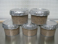 "5x Magic FATTORIA's PF TEK fungo ""orecchiette"" crescere POT KIT (medium size)."