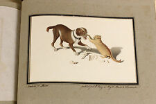 c1818 | Gottfried MIND Oeuvre | stunning h/c AQUATINTS | cats | AUTISTIC savant