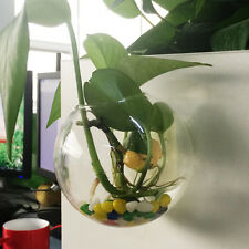 Wall Hanging Clear Glass Ball Plant Flower Terrarium Vase Bottle Fish Container
