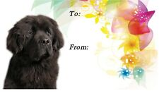 Newfoundland Dog Self Adhesive Gift Labels design No. 1. by Starprint