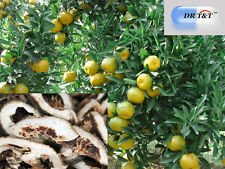ZHI Qiao (Fructus aurantii) Amari arancione 100g erba secca