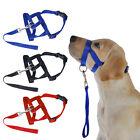 Strap Dog Head Collar Gentle Halter Leash Leader for Training Dog Blue Red Black