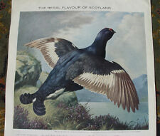 1960's Chivas Regal Whisky Advertisement Black Cock Grouse Scotland