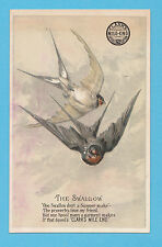 CLARKS COTTON - ADVERTISING / SONG BIRDS CARD - SWALLOW  -  C 1880's