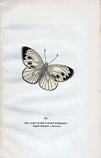 1832 BUTTERFLIES THE LARGE WHITE GARDEN BUTTERFLY BRITAIN