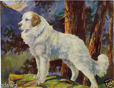 1930 Book Plate Dog Print Pyrenean Mountain Painting Nina Scott Langley
