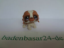 Littlest Pet Shop  LPS 1133 Bernhardiner, Dog, Hound von Hasbro (10)