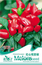 20 Original Pack Seeds Ornamental Red Pepper Seeds Capsicum Cayenne Organic B053