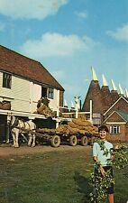 postcard  Kent Whitbreads hop farm at Paddock Wood  un  posted