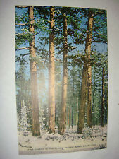 Vintage linen PC Pine Timber in the Scenic Great Pacific  Northwest