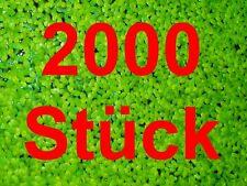 **WASSERLINSEN** 200qcm Lemna Schwimmpflanze Algenkiller Aquarienpflanze Teich