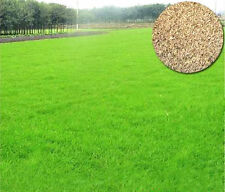50g Seedlings Grass Seed Plants Seeds Plants Garden Arundinacea Household Lawn