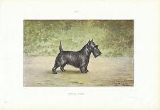 """Document Ancien - Scottish Terrier -  Monographie de Chien de Chasse 1965 """""""