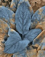 Blue Brown Decorative Plant Leaves Botanical Bathroom Bedroom Wall Art Picture