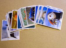 Sammelbilder von Ferrero Duplo - Ozeane der Welt - 28 Bilder Aufkleber