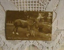 ANTIQUE REAL POSTCARD BLACK AND WHITE HORSE  FARM ANIMAL 1912