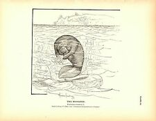 Rare 1884 Antique Fish Print ~ The Manatee Collection ~ Lot of 2 prints