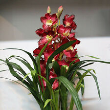 100Pcs Chinese Home Cymbidium Orchid Indoor Potted Orchid Flowers Plant Seeds