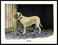 MASTIFF GREAT VINTAGE STYLE DOG PRINT POSTER