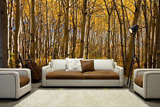 Boreal Forest in Yukon Territory,  Canada  12' x 8' (3,66m x 2,44m)-Wall Mural