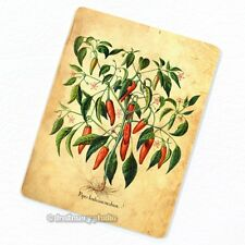 Hot Chili Pepper Plant #2 Deco Magnet, Decorative Fridge Kitchen Décor Chilli