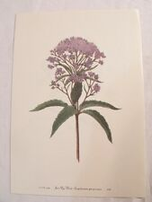 Set of 12 Vintage MARY WALCOTT Botanical Wildflower Art Prints