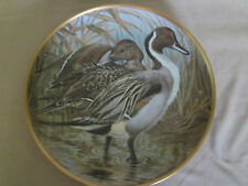PINTAIL collector plate BASIL EDE Waterbirds DUCK Birds WILDLIFE