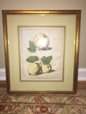 Giltwood Framed Antique Print QUINCE-APPLE-PEAR Pomologia Knoop 1758