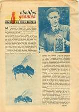 Beekeeper Bees Honey Harvest Abeilles Récolte du Miel Sweden 1953 ILLUSTRATION