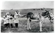 girls pulling on donkey's tail --1920s?  8x10 reprint